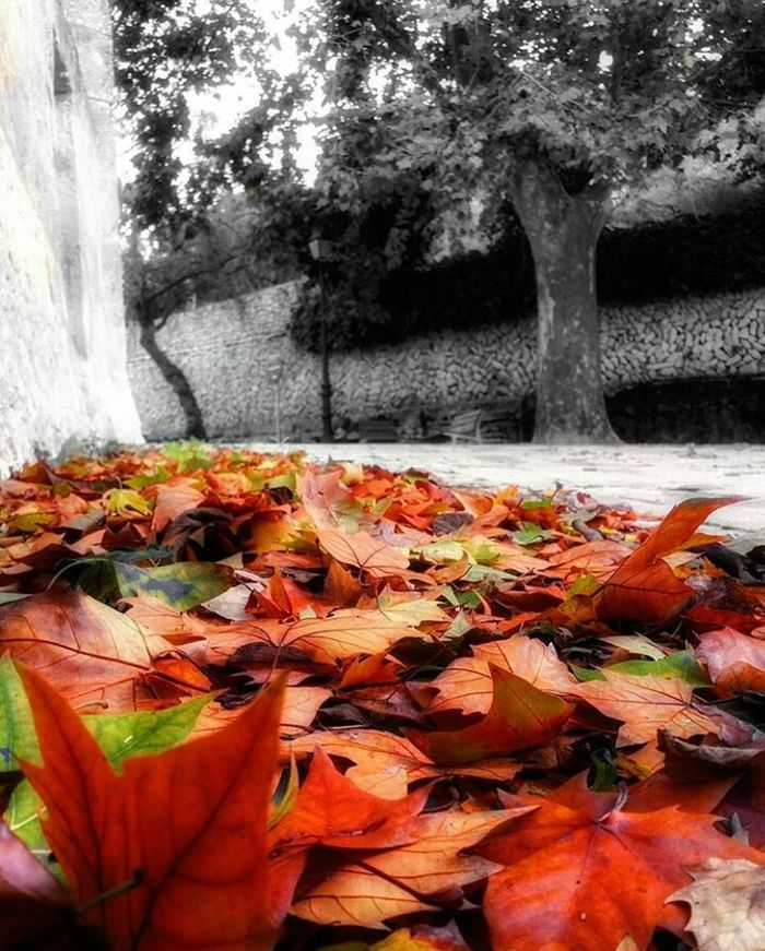 Happy Sunday! Autumn Colors Autumn Sunday Tree Nature Leaf Autumn No People Day Close-up Outdoors Beauty In Nature First Eyeem Photo Black And White Black And White With A Splash Of Colour Blackandwhite Black & White Autumn Collection