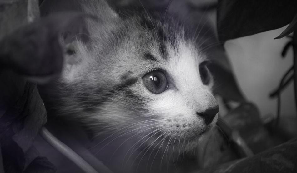 Pop Up Animal Black Cat Eyes Feline Flare Kitten Monochrome Photography