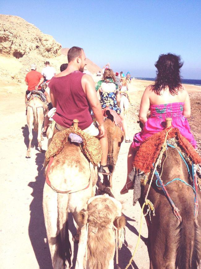 египет пустыня верблюд пляж солнце Море Sea Sea And Sky Sun Egipt People