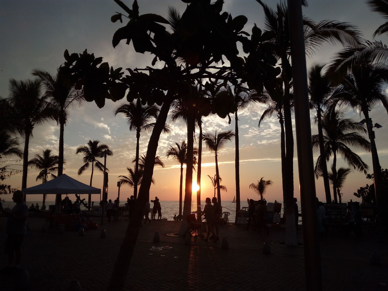 Sunset Tourism Travel Destinations Tree Travel Palm Tree Sea Vacations Scenics Tourist Silhouette Sky Outdoors Nature Vallarta,Mexico Nature Beach Beauty In Nature Night Branch