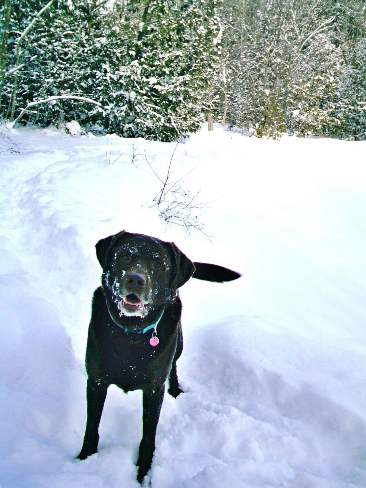 Hudson Winter Of 2014 2015 Dogs