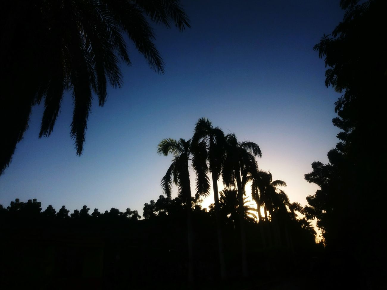 Samsungj5photography📱 PhonePhotography Phoneography Sunset Nature Photography Nature Trees And Sky Trees Palms Palm Trees MyUniversity 🙌❤ Nature_collection Naturephotography Nature_collection Nature Beauty Nature_collection Landscape_collection EyeEmNatureLover EyeEm Nature Collection
