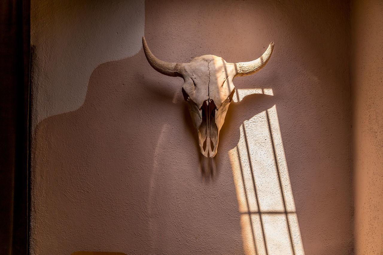Adobe Adobe Wall Animal Themes Bison Bones Close-up Day Domestic Animals Interior Mammal No People Skull Skulls And Bones