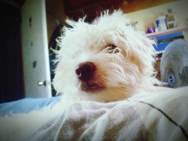 I Love My Dog Dog Life 🐩🐾 Mii Guera ♥♡