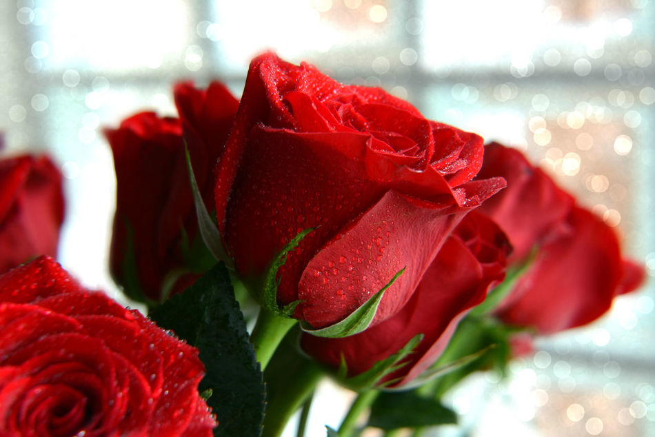Beauty In Nature Bouquet Bouquet Of Flowers Bouquet Of Roses Close-up Flower Flower Head Fragility Freshness Get Well Soon! In The Window Mothers Day Nature No People Petal Red Roses Valentine's Day  Water Droplets Water Drops Window