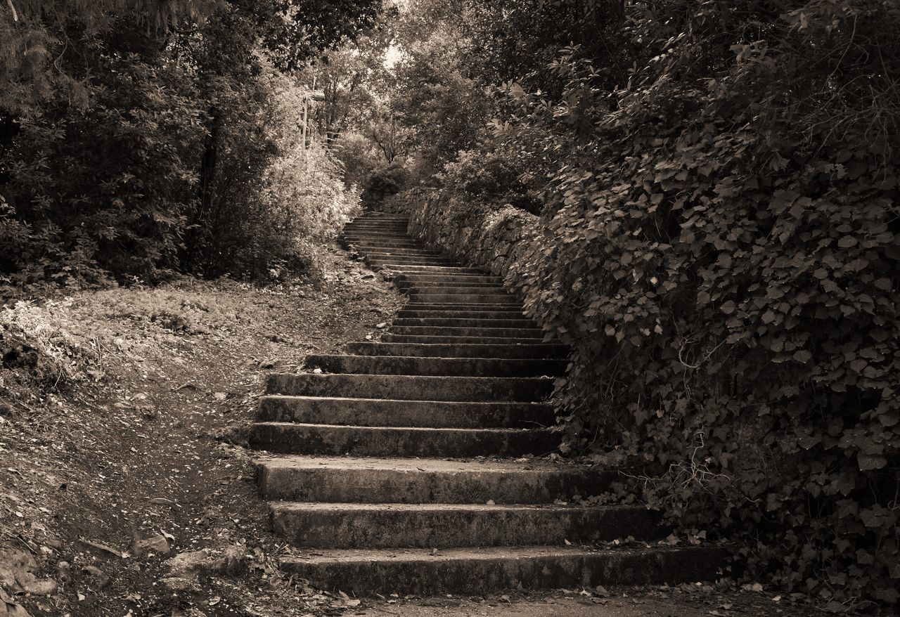 steps, staircase, steps and staircases, tree, the way forward, nature, no people, day, outdoors