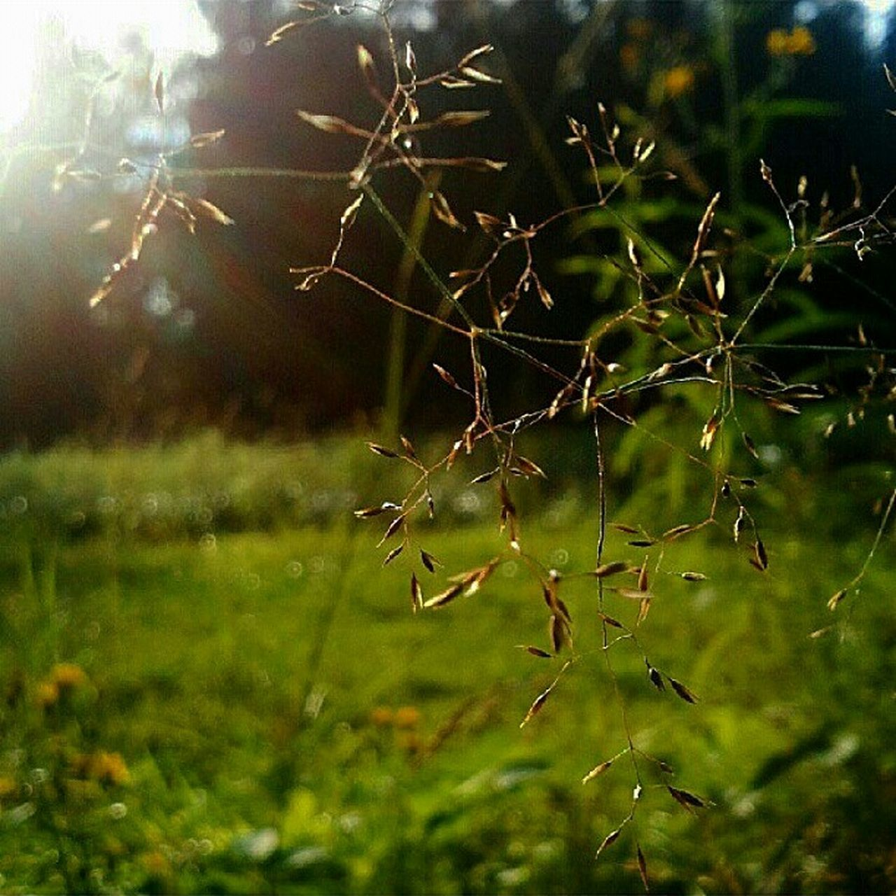 growth, nature, plant, no people, outdoors, green color, day, beauty in nature, close-up, animal themes, grass, freshness