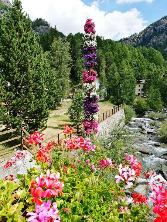 Colour Of Life Flowers Sun Mountains Val D'Aosta Lillaz Cogne