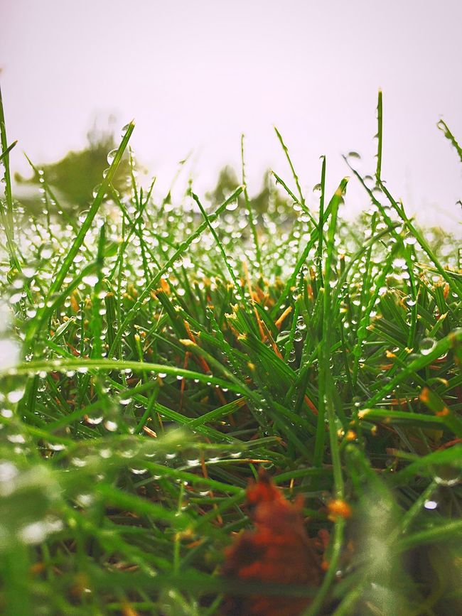 Drop Grass Green Color Water Plant Growth Selective Focus Wet Close-up Dew Blade Of Grass Nature Leaf Tranquility Beauty In Nature Season  Freshness Environment Vibrant Color Uncultivated