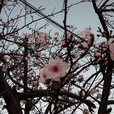 Camino a casa....Nofilter ,Sakura