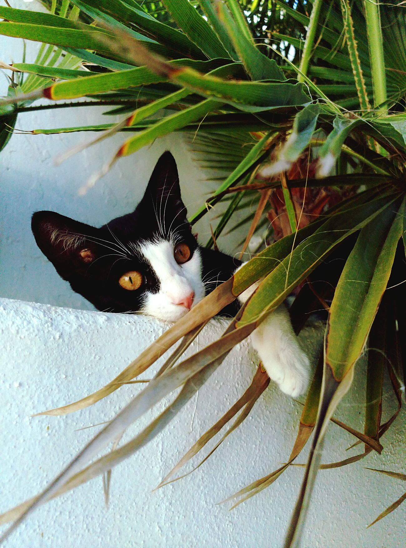 Gusii Cat 💕