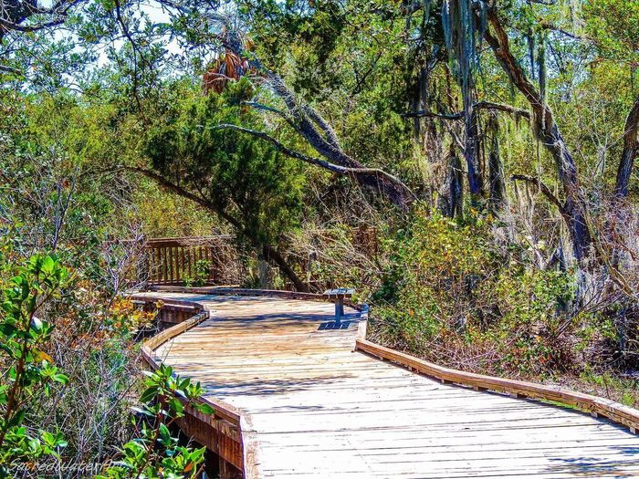 Boardwalk landscape Tree Forest Nature Outdoors Beauty In Nature Tranquil Scene Tranquility Lush Foliage Pinaceae Wood - Material Scenics Travel Destinations Day Vacations Landscape Tree Trunk Rural Scene Bamboo - Plant Health Spa Growth EyeEmNewHere EyeEmNewHere.