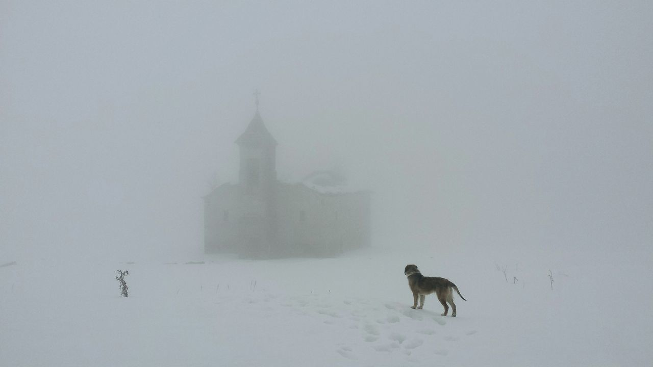 Hounted Church Fog Dog Mystic