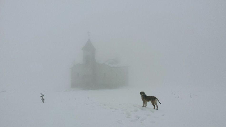 Hounted Church Fog Dog Mystic