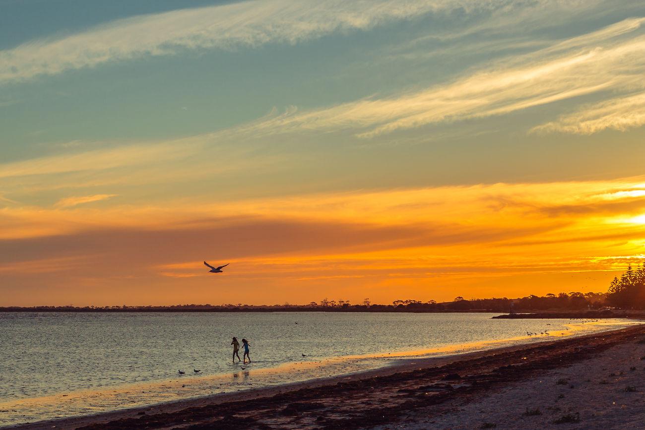 Altona, VIC Australia Beauty In Nature Bird Coastline Nature Orange Color Outdoors Scenics Sea Sea Gull Shore Sky Sunset Tranquil Scene Unrecognizable Person