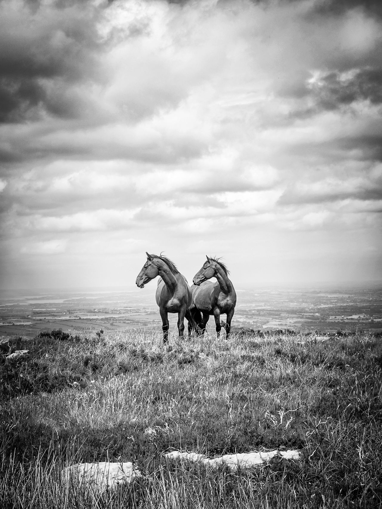 🐎🐎 Cloud - Sky Nature Animal Sky Outdoors Mammal Day No People Domestic Animals Animal Themes Horse Horses Equine Hiking Silverminesmountain Ireland Lost In The Landscape County Tipperary Black And White Black & White Black And White Friday