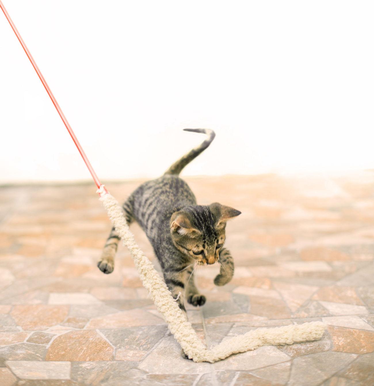 Beautiful stock photos of schlange,  Cat,  Domestic Animals,  Domestic Cat,  Home Interior