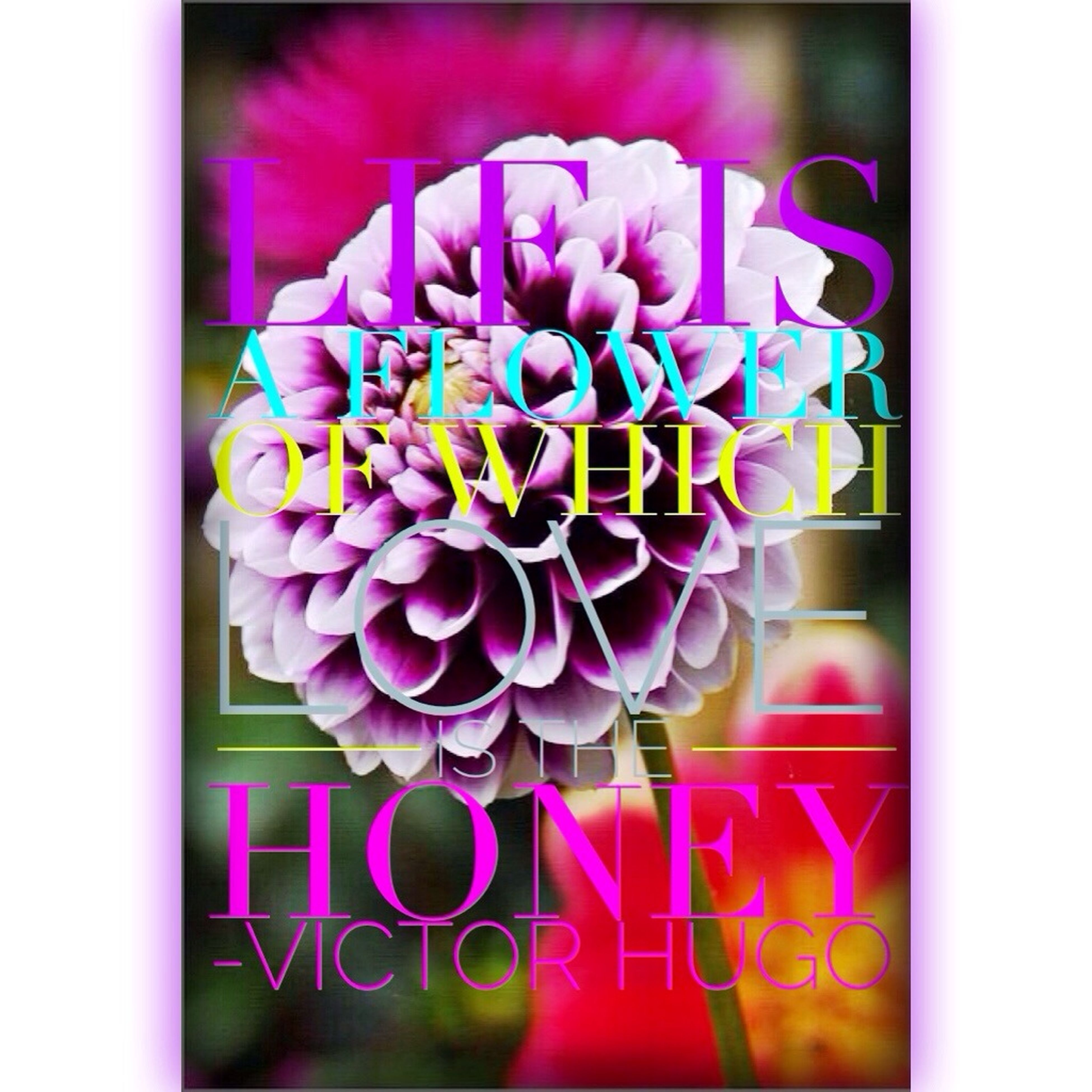 transfer print, auto post production filter, text, western script, indoors, close-up, communication, pink color, multi colored, flower, purple, freshness, no people, studio shot, still life, capital letter, decoration, selective focus, colorful, ideas