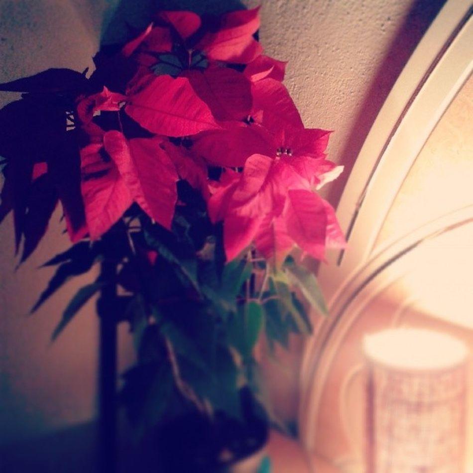 Nos vamos a dormir Pretty Floripondia Goodnight Red Flower