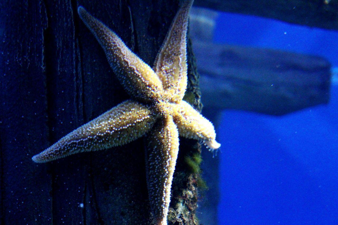 EyeEm Akwarium EyeEm Best Shots EyeEm Best Edits EyeEm Gallery Color Beauriful The Week Of Eyeem Hello World Helloworld Москванариум подводный мир аквариум подводный Woter Cute Beautiful