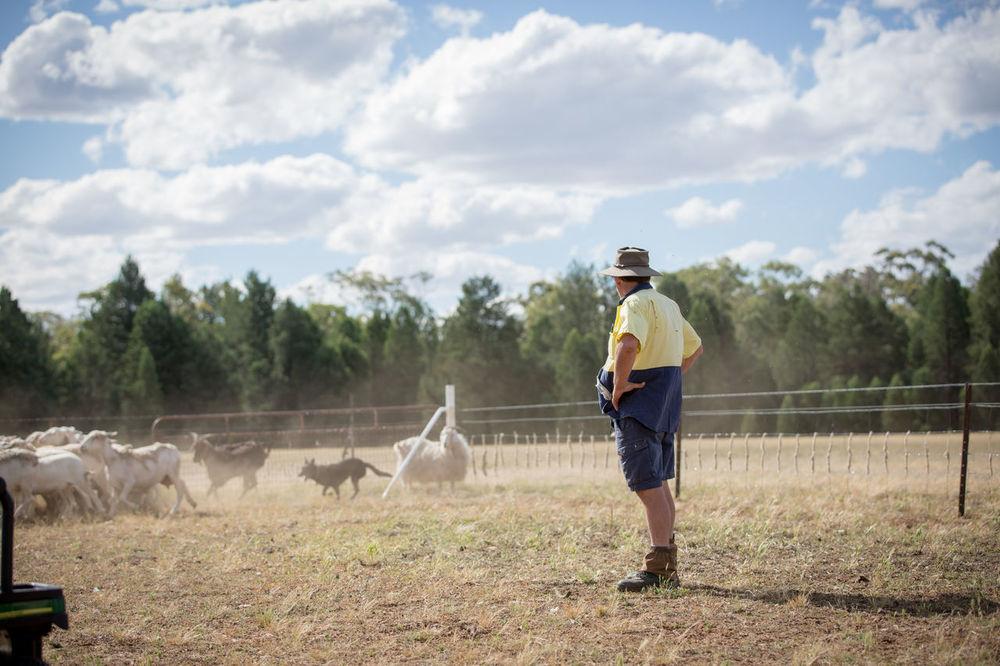 Clouds Dubbo Farm Farmwork One Man Only Sheep Sheep Work Sheepdog Sky Work