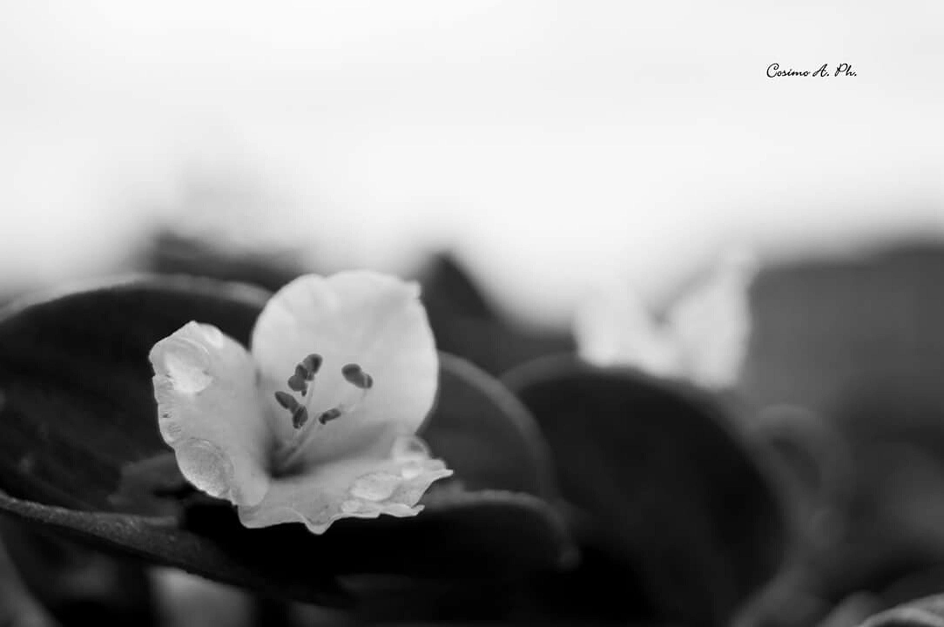 Delicate Delicatessen Delicate Beauty Delicate Flowers Tt_macro_delicatedetails Delicatezza Blackandwhite Black And White Black & White Black&white