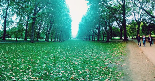 Showcase July A piece of peace in the park. St James Park  Autumn Raw Photography Nature Landscape