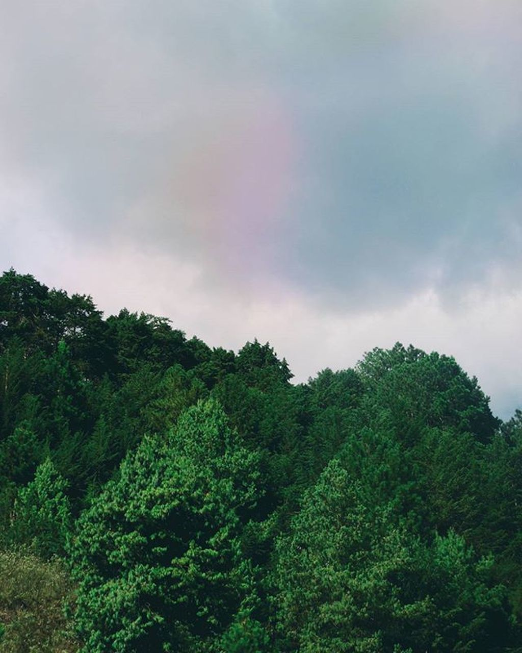 tree, nature, sky, beauty in nature, growth, green color, no people, low angle view, rainbow, outdoors, day, cloud - sky, scenics, forest