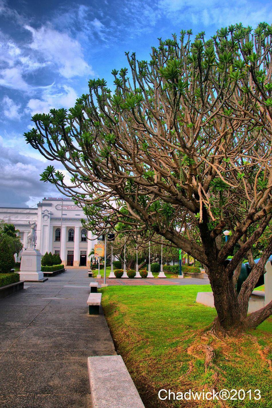 Malolos Trees Photowalk
