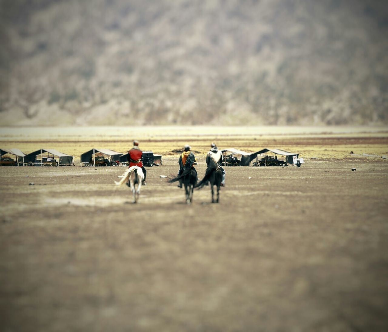 Welcome to Bromo Country Horse Nature Photography Naturelovers