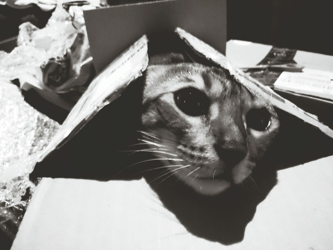 My Maya Cat Box Crazy Kitty