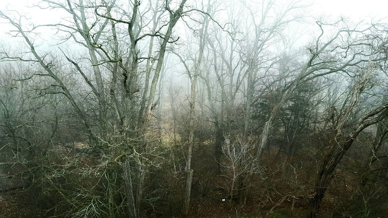 My Best Photo 2015 Foggy December morning. Beautiful nature. Sleepy forest.