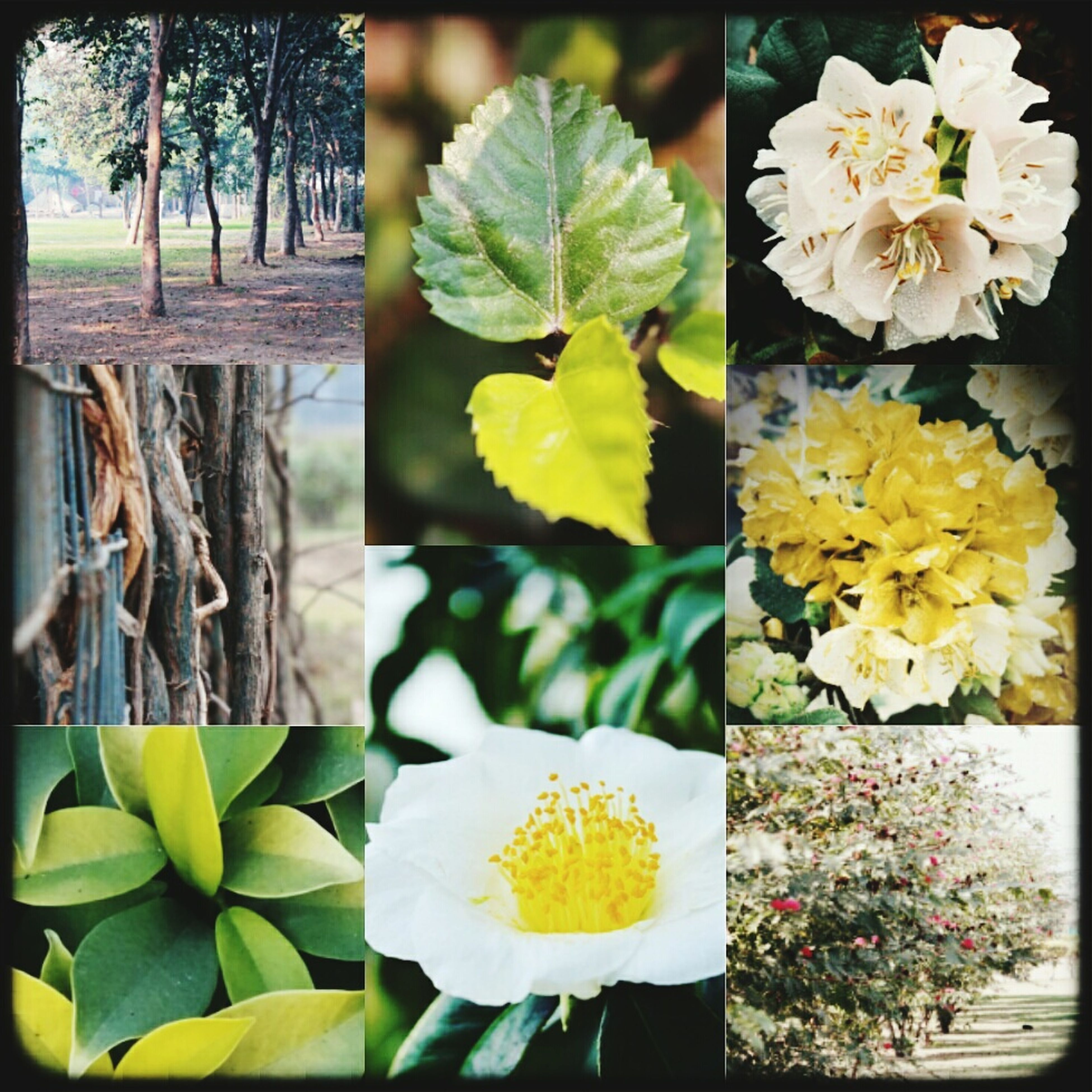 flower, petal, freshness, fragility, flower head, yellow, transfer print, growth, beauty in nature, plant, white color, nature, blooming, leaf, auto post production filter, in bloom, blossom, focus on foreground, close-up, day
