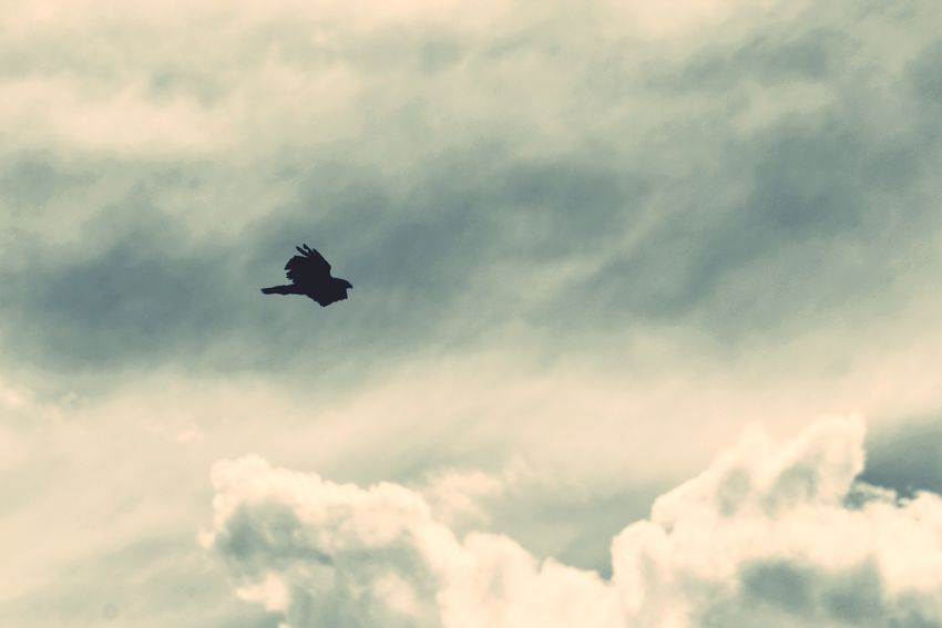 Flying Sky Low Angle View Bird Mid-air Cloud - Sky Nature Outdoors No People Beauty In Nature Animals In The Wild Day Spread Wings Animal Themes EyeEm Best Shots Mountain Range Cloudscape