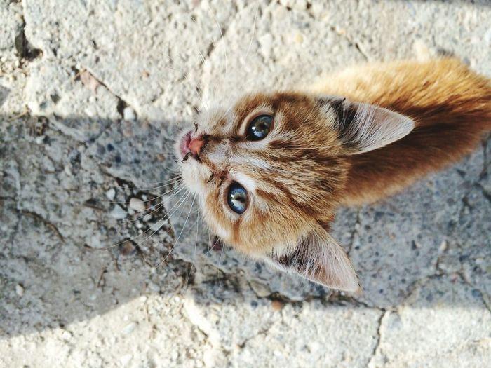 Pretty♡ Cat♡ First Eyeem Photo