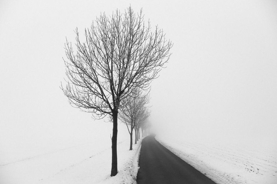 foggy day Black And White Photography Blackandwhite Focus On Foreground Foggy Foggy Street Grey Oberbaumbrücke Oberlausitz Sax Silence Silence Of Nature Snow Snow And Fog Streetphotography