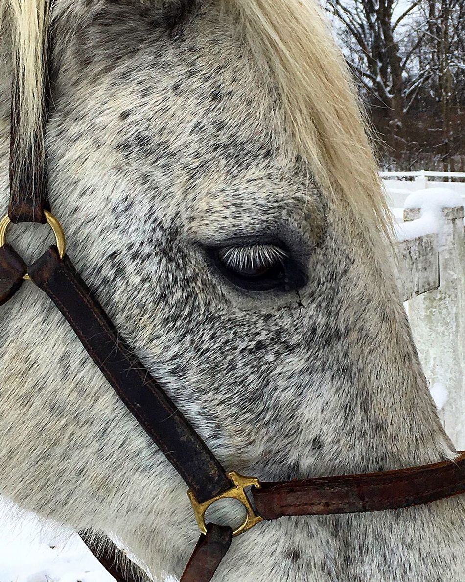 Day In The Country Making New Friends Horses Beautiful Friendly EyeEm Nature Lover EyeEm Gallery Taking Photos IPhoneography Iphoneonly Camerateur Wintertime Beautiful Horses Stolen Moments Horse Photography  Horsesofinstagram Upclose