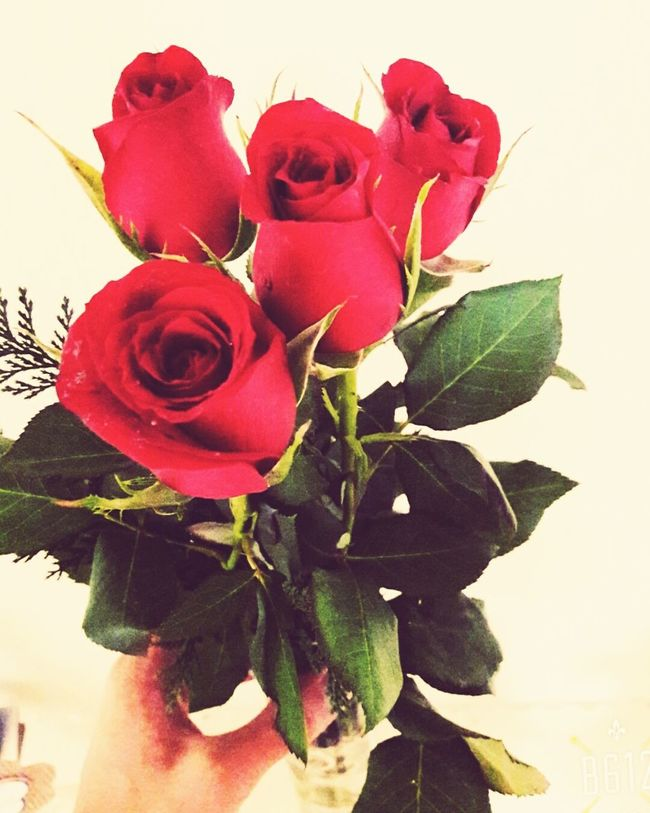 Flores Rosas🌹🌹 Likeforlike Followme