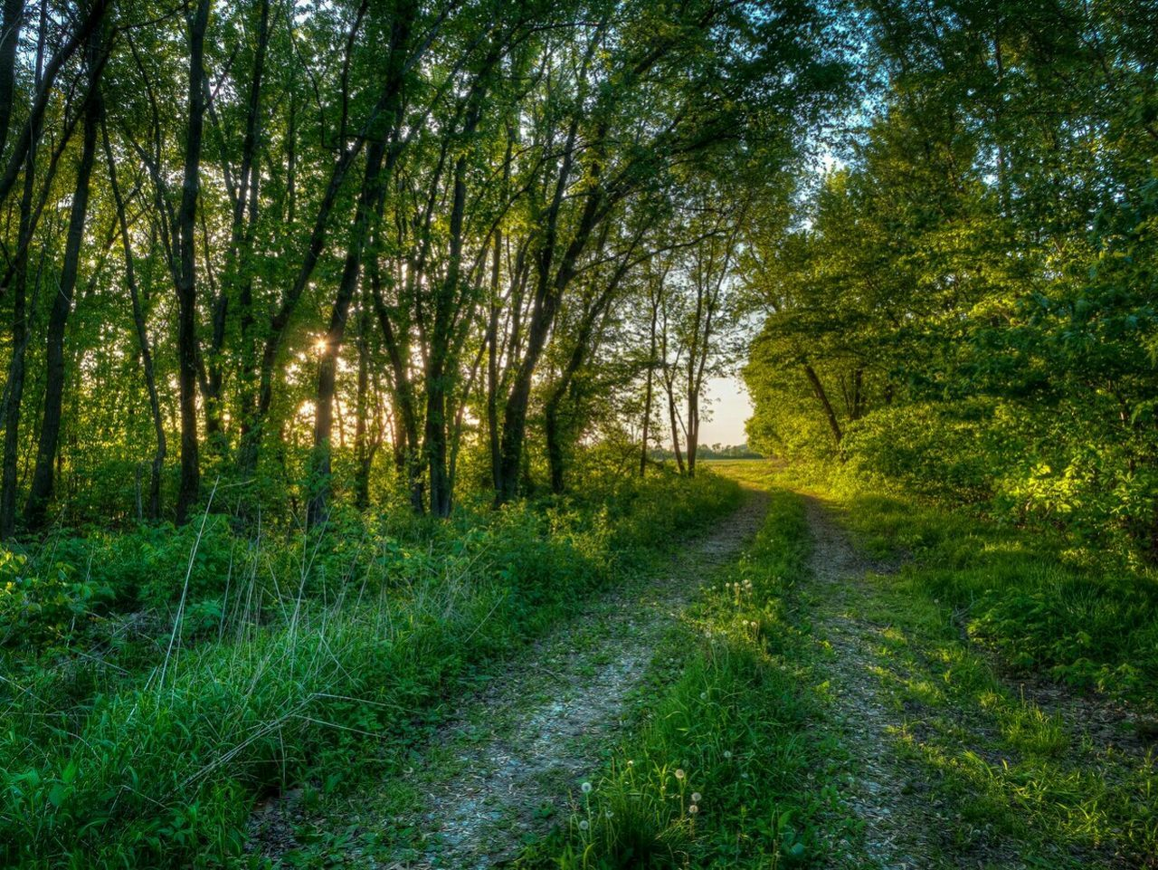 Oak Tree Forest Magical Sunset Pathway Missouri State Parks