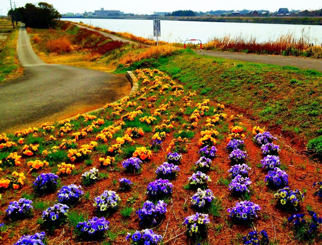 River Flowers Landscape Riverside