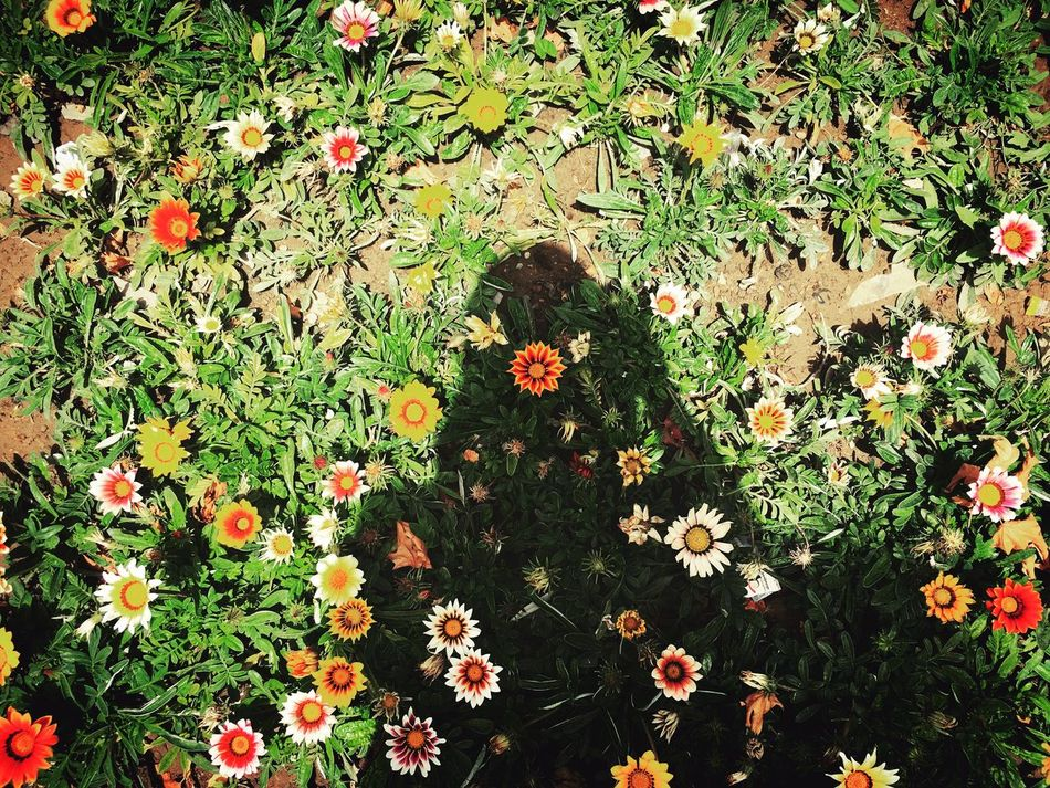 Flowers Sunlight Sunnyday☀️ Streetphotography Shadow That's Me Iran♥ Hamedan Noontime  43 Golden Moments