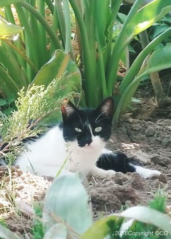 Stray Blackandwhite Shocked Face Unwanted Wild Cat EymEm Nature Lovers