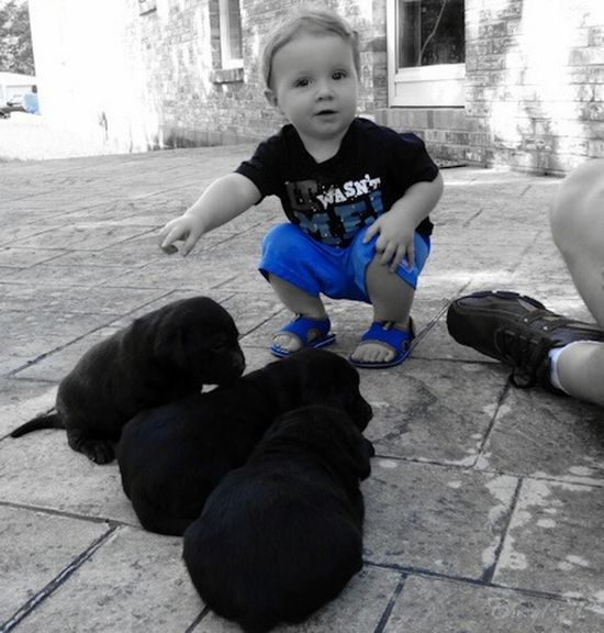 Day 3 of the Colorsplash challenge ... Some of my favorite photos I took this year was the first time my grandson seen the puppies this Summer ... he was mesmerized by them ... as I think there is nothing more precious then a child with a puppy ... Pure Innocence . 5 Shot Colour Splash Challenge Colorsplash Taking Photos Popular