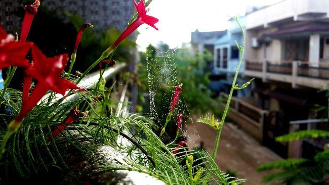Got this today morning..Eye4photography  EyeEm Nature Lover EyeEm Gallery Eyevision Eyevision. Eyem Best Shots