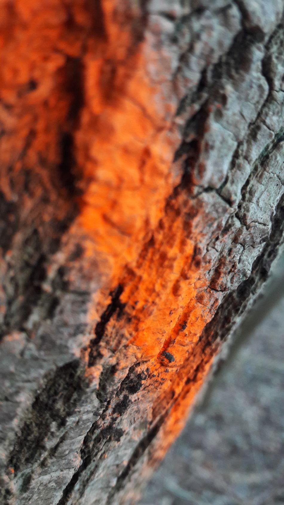 Wood - Material Close-up Textured  No People Nature Backgrounds Day Outdoors Full Frame Wood Grain No Filter Not Perfect Original Beauty In Nature Color Orange Color Focus On Foreground Nature Walking Around Enjoying Life Hohwacht Tree Tree Trunk Timber Tree Ring
