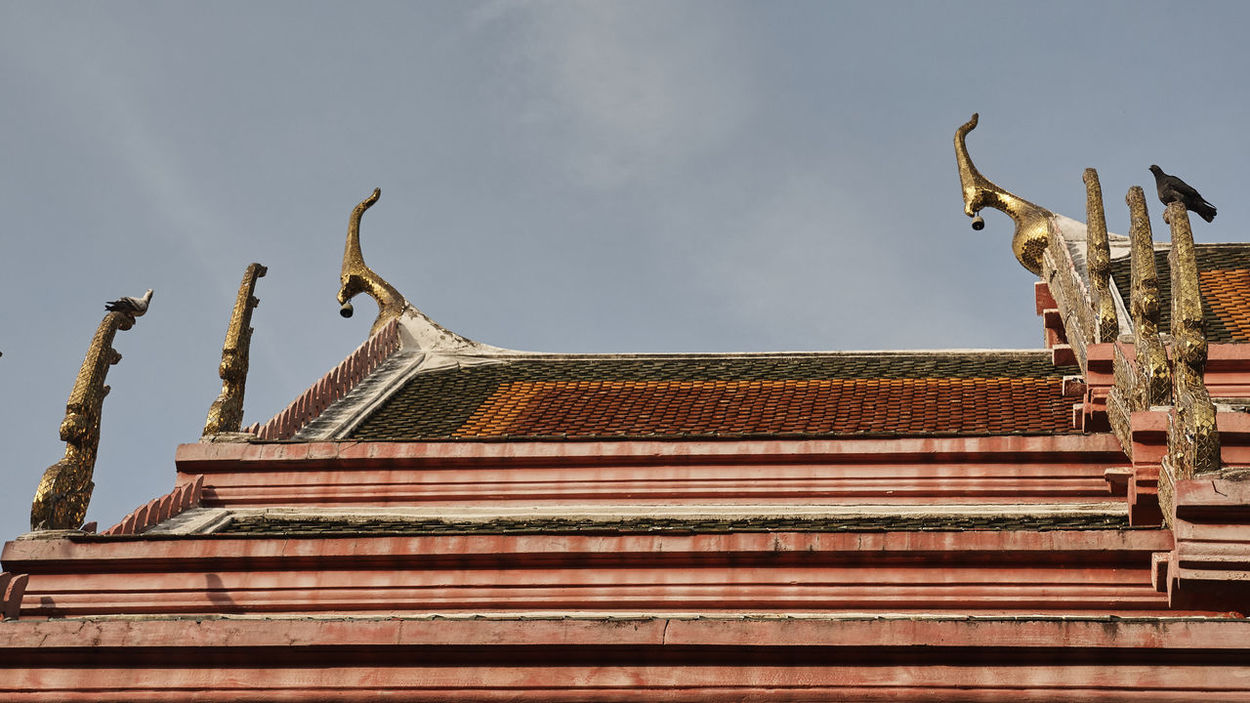 Built Structure Pigeon Pigeons On Temple Roof Temple Roof Tiled Roof