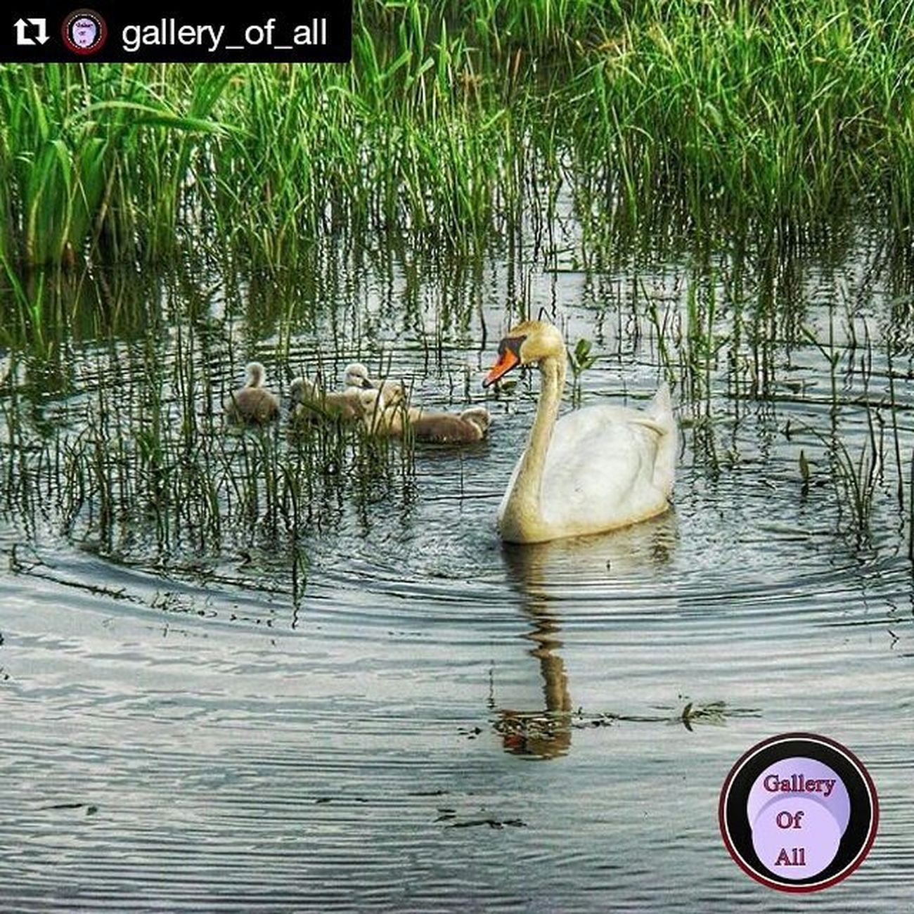 Repost @gallery_of_all with @repostapp ・・・ ❤️ENHORABUENA❤️ ❤️CONGRATULATIONS❤️ ~~~~~~~~~~~~~~~~~~~~ . Found/Adm: @pilarm28 y @loligoam . Member: @hubdirectory 🌍 ~~~~~~~~~~~~ 🌟THIS GREAT PHOTO BY :🌟 . 🏆👉@jeanphillipbrulls👈🏆 ~~~~~~~~~~~~~~~~~~~~~~~~~~~~~~~~ . .Selected By / Seleccionada Por: ✨@pilarm28 y @loligoam✨ . 〰〰〰〰〰〰〰〰〰〰〰〰〰 . 🌇🏫❤️🌙😍🌎😊 ~~~~~~~~~~~~~~~~~~~~~~~~~~~~~~~~ Recuerda seguir nuestras paginas para optar a menciones. . Gallery_of_all . . Remember To Follow our Page For Mentions. . @gallery_of_all . @gallery_of_splash . @gallery_of_byw . 〰〰〰〰〰〰〰〰〰〰〰〰〰〰〰〰〰〰 Solo fotos originales/Only original 〰〰〰〰〰〰〰〰〰〰〰〰. Frameable Fotoclub_ab Hdr_portugal Coolworld_hdr Hdr_spain Love_hdr_colour Pristine_hdr Stars_hdr Editmoments_hdr H20_natura Lens_lovers_united Hdr_oftheworld Loves_skyandsunset Sunsets_oftheworld Fotofanatics_alltags Best_expression_hdr Ilove_hdr Instaphotomatix Instaamici Yes_hdr Ptk_sky
