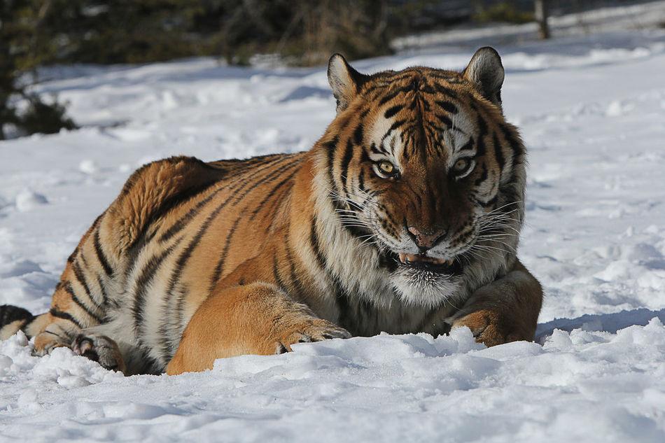 Beautiful stock photos of kunst, Animal Themes, Animal Wildlife, Animals In The Wild, Big Cat