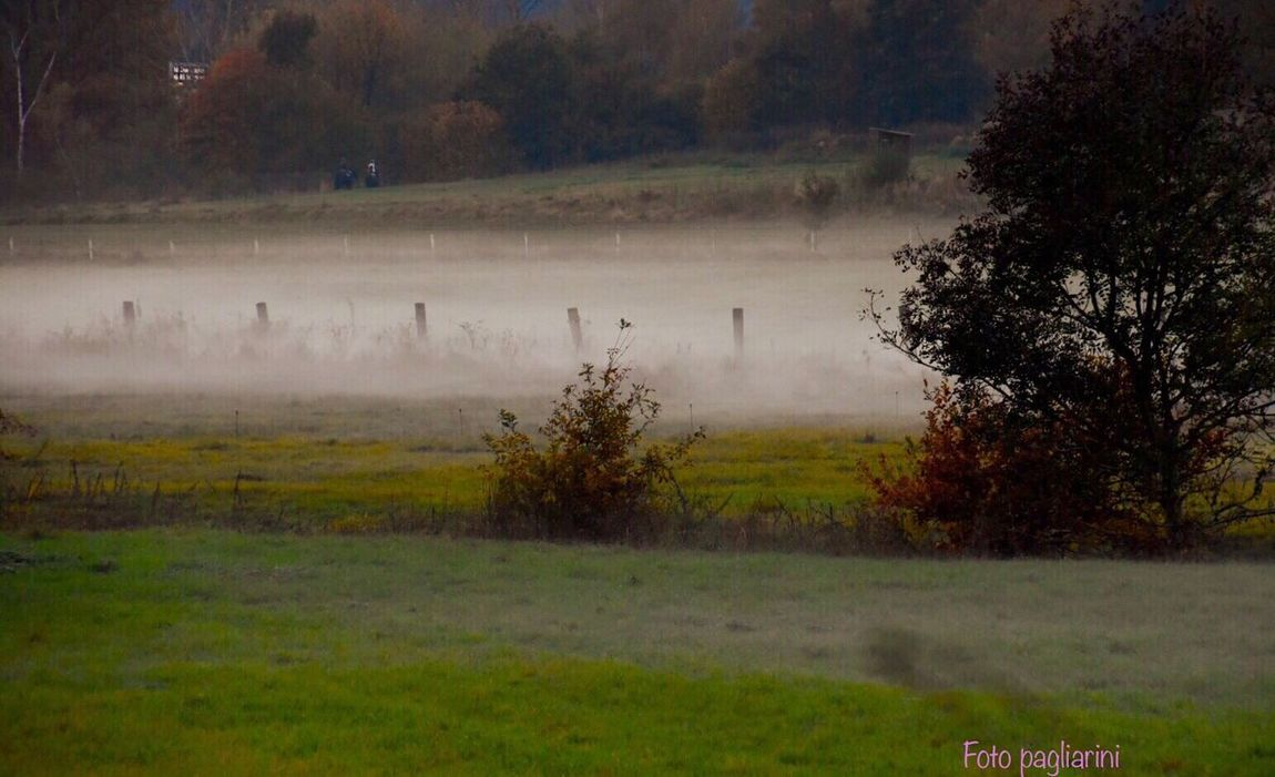 Fog Is Catching Up Nature Tree Beauty In Nature No People Outdoors Landscape Somwhere In Germany 🎬 Irgendwo In Deutschland 🎬 Places You Must To See EyeEm Best Shots EyeEm Gallery EyeEm Eye4photography  EyeEm Nature Lover Somewhere In Germany Nature_collection