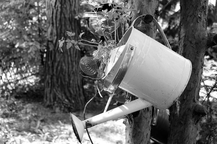 Black & White Black And White Black And White Photography Blackandwhite Blackandwhite Photography Close-up Day Focus On Foreground Nature Nature Nature Photography No People Outdoors Tree Tree Trees Watering Can Wateringcan The Great Outdoors - 2017 EyeEm Awards Live For The Story